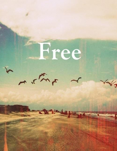 """The word """"Free"""" on backdrop of birds flying at the beach with clouds in the distance."""